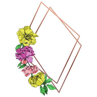Vector isolated pink, purple and yellow peonies with green leaves on white background. Engraved ink art. Frame border ornament with copy space. clip art vector