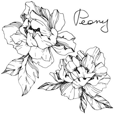 Vector isolated monochrome peony flower sketch and handwritten lettering on white background. Engraved ink art. stock vector