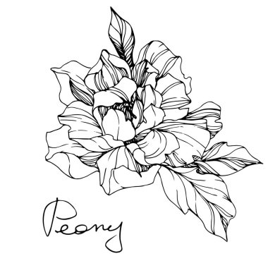Vector isolated monochrome peony flower sketch and handwritten lettering on white background. Engraved ink art.