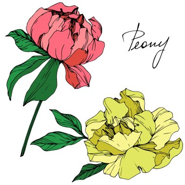 Vector isolated living coral and yellow peony flowers with green leaves and handwritten lettering on white background. Engraved ink art.
