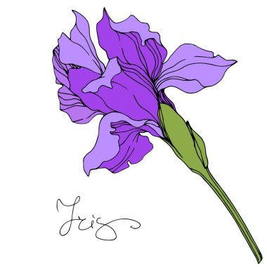 Vector purple iris isolated illustration element. stock vector
