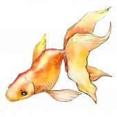 Fotografie Akvarelu vodní barevné rybku izolované na bílém ilustrace prvek