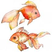 Akvarelu vodní barevné goldfishes izolované na bílém ilustrace prvky