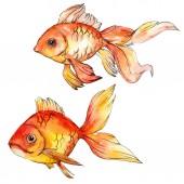 Akvarell vízi színes aranyhal elszigetelt fehér illusztráció elemek.