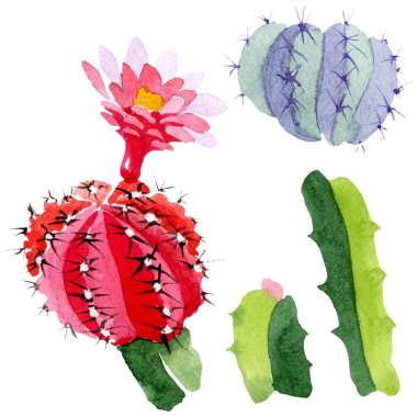 Green and red cacti isolated on white. Watercolor background illustration set. stock vector