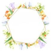 Narancssárga fehér virágos botanikai Irisz. Vad tavaszi levél vadvirág elszigetelt. Akvarell háttér illusztráció készlet. Akvarell rajz divat aquarelle elszigetelt. Test határ Dísz tér.