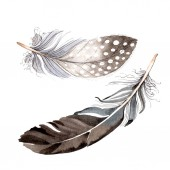 Watercolor blue and black bird feather from wing isolated. Aquarelle feather for background. Watercolour drawing fashion. Isolated feathers illustration element.