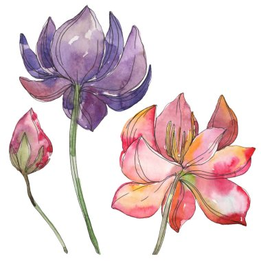 Pink and purple lotus foral botanical flower. Wild spring leaf wildflower isolated. Watercolor background illustration set. Watercolour drawing fashion aquarelle. Isolated lotus illustration element.