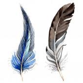 Fotografie Ptačí peří z křídla izolované na bílém. Sada akvarel pozadí obrázku