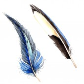 Fotografie Bird feathers from wing isolated on white. Watercolor background illustration set.