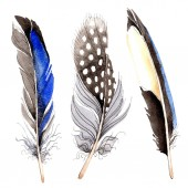 Bird feathers from wing isolated on white. Watercolor background illustration set.