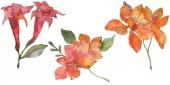 Červené a žluté tropické květinové botanické květin. Divoký jarní listové wildflower. Sada akvarel pozadí obrázku. Akvarel výkresu módní aquarelle. Prvek ilustrace izolované květina