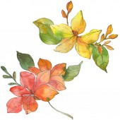 Fotografie Red and yellow tropical floral botanical flowers. Wild spring leaf wildflower. Watercolor background illustration set. Watercolour drawing fashion aquarelle. Isolated flower illustration element.