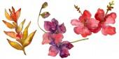 Elszigetelt fehér virágok. Akvarell háttér illusztráció készlet.