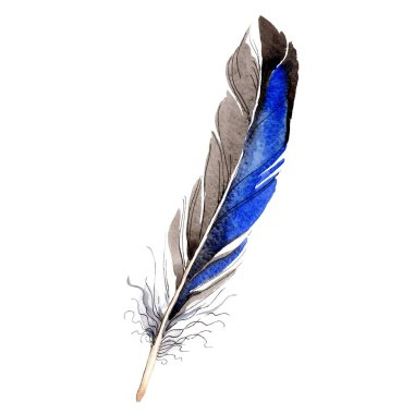 Bird feather from wing isolated on white. Watercolor background illustration element. stock vector