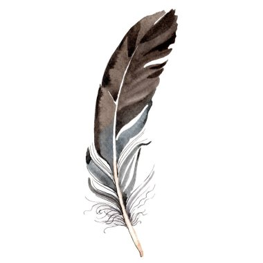 Bird feather from wing isolated on white. Watercolor background illustration element.