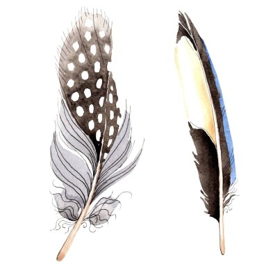 Bird feathers from wing isolated on white. Watercolor background illustration set. stock vector