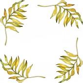 Fotografie Tropické květinové botanické květin. Exotické rostliny listů izolován. Sada akvarel pozadí obrázku. Akvarel, samostatný výkresu módní aquarelle. Frame hranice ozdoba náměstí