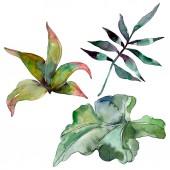 Fotografie Zelené listy rostlin Botanická zahrada květinové listy. Exotické havajské tropické léto. Sada akvarel pozadí obrázku. Akvarel výkresu módní aquarelle. Izolované listy ilustrace prvek