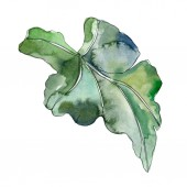 Fotografie Green leaf plant botanical garden floral foliage. Exotic tropical hawaiian summer. Watercolor background illustration set. Watercolour drawing fashion aquarelle. Isolated leaf illustration element.