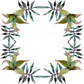 Zelené listy rostlin Botanická zahrada listoví. Exotické havajské tropické léto. Sada akvarel pozadí obrázku. Akvarel, samostatný výkresu módní aquarelle. Frame hranice ozdoba náměstí