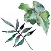 Zöld leveles növény botanikus kert virágos lombozat. Egzotikus trópusi Hawaii nyári. Akvarell háttér illusztráció készlet. Akvarell rajz divat aquarelle. Elszigetelt levél ábra elem.