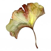Fotografie Yellow and green ginkgo biloba isolated leaf. Watercolor background illustration.