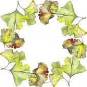 Zelené a žluté ginkgo biloba listoví akvarel pozadí obrázku sada. Frame hranice ornament se kopie prostoru.