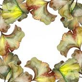 grüne und gelbe Ginkgo Biloba Laub Aquarell Hintergrund Illustrationsset. Rahmen-Bordüre mit Kopierraum.