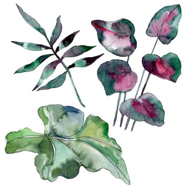 Green leaf plant botanical garden floral foliage. Exotic tropical hawaiian summer. Watercolor background illustration set. Watercolour drawing fashion aquarelle. Isolated leaf illustration element. stock vector