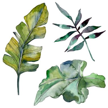 Green leaf plant botanical garden floral foliage. Exotic tropical hawaiian summer. Watercolor background illustration set. Watercolour drawing fashion aquarelle. Isolated leaf illustration element.