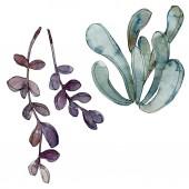 Egzotikus trópusi Hawaii botanikai pozsgás növények. Akvarell háttér illusztráció készlet. Elszigetelt succulents ábra elemei.