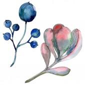 Sukulentní rostliny Botanická. Sada akvarel pozadí obrázku. Prvky ilustrace izolované sukulenty.