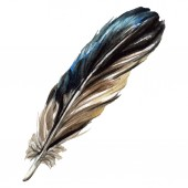 Photo Blueand black bird feather from wing isolated. Watercolor background illustration. Isolated feather illustration element.