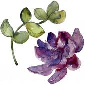 Egzotikus trópusi succulents. Akvarell háttér illusztráció készlet. Elszigetelt succulents ábra elemei.