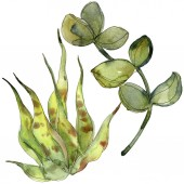 Fotografie Exotických tropických sukulentů. Sada akvarel pozadí obrázku. Prvky ilustrace izolované sukulenty