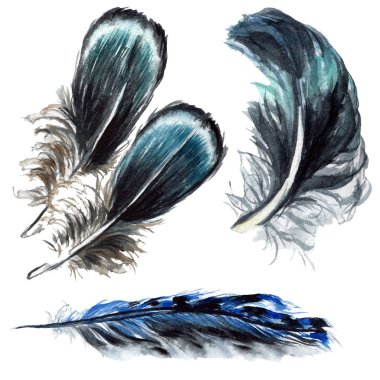 Blue and black bird feathers from wing isolated. Watercolor background illustration set. Isolated feathers illustration elements. stock vector