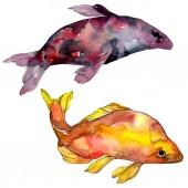 Pettyes vízi víz alatti színes trópusi hal meg. Vörös-tenger és egzotikus halak belül. Akvarell háttér beállítása. Akvarell rajz divat aquarelle. Elszigetelt hal ábra elem.