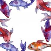 aquatische tropische Unterwasserfische Set. Rotes Meer und exotische Fische darin: Goldfische. Aquarell Hintergrundillustration Set. Aquarellzeichnung Modeaquarell isoliert. Rahmen Rand Ornament Quadrat.
