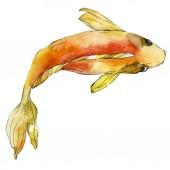 Vízi víz alatti színes trópusi hal meg. Vörös-tenger és egzotikus halak belül: Aranyhal. Akvarell háttér beállítása. Akvarell rajz divat aquarelle. Elszigetelt aranyhal ábra elem