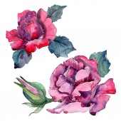 Fotografie Purple and red rose floral botanical flowers. Wild spring leaf wildflower isolated. Watercolor background set. Watercolour drawing fashion aquarelle. Isolated rose illustration element.