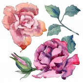 Rózsaszín és lila virágos botanikai rózsaszirom. Vad tavaszi levél vadvirág elszigetelt. Akvarell háttér illusztráció készlet. Akvarell rajz divat aquarelle. Elszigetelt Rózsa ábra elem.