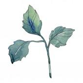 Rózsa zöld levelek floral botanikus virág. Vad tavaszi levél vadvirág elszigetelt. Akvarell háttér illusztráció készlet. Akvarell rajz divat aquarelle. Elszigetelt Rózsa ábra elem.