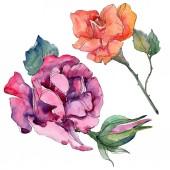 Fotografia Rurple e arancio rosso floreali botanici fiori di rosa. Foglia di primavera selvaggio isolato. Insieme di illustrazione dellacquerello della priorità bassa. Aquarelle di moda disegno acquerello. Elemento isolato illustrazione rosa