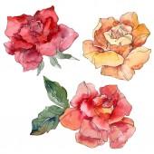 Fotografia Fiore arancione e rosso Rose floreale botanica. Millefiori di foglia di primavera selvaggio isolato. Insieme di illustrazione dellacquerello della priorità bassa. Aquarelle di moda disegno acquerello. Elemento isolato illustrazione rosa