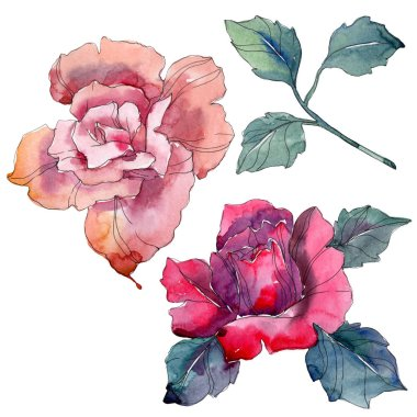 Pink and red rose floral botanical flowers. Wild spring leaf wildflower isolated. Watercolor background illustration set. Watercolour drawing fashion aquarelle. Isolated rose illustration element.