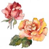 Fotografie Orange und rote Rose floral botanische Blume. Wilde Frühling Blatt Wildblumen isoliert. Aquarell Hintergrund Illustration-Set. Aquarell Zeichnung Mode Aquarell. Isolierte rose Abbildung element