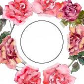 Fotografie Rosa rose floral botanische Blume. Wilde Frühling Blatt Wildblumen isoliert. Aquarell Hintergrund Illustration-Set. Aquarell Zeichnung Mode Aquarell isoliert. Frame Border Ornament Quadrat