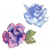 Fotografie Blaue und violette Blumen Botanischer Rosenblüte. Wilde Frühling Blatt Wildblumen isoliert. Aquarell Hintergrund Illustration-Set. Aquarell Zeichnung Mode Aquarell. Isolierte rose Abbildung element