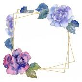 Rózsa virág botanikai virág. Vad tavaszi levél vadvirág elszigetelt. Akvarell háttér illusztráció készlet. Akvarell rajz divat aquarelle. Test határ Dísz tér.